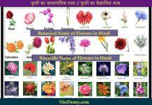 Botanical Name of Flowers in Hindi