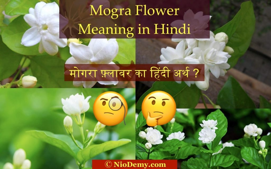 Mogra Flower Meaning in Hindi